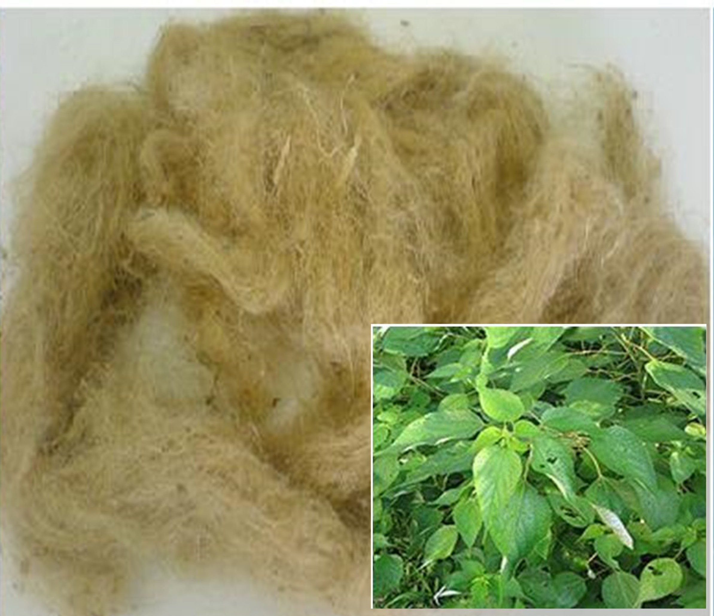 Paper On Ramie Fibers Surfi